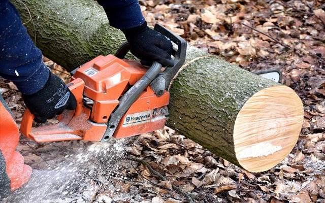 庭木の伐採費用の相場はどれくらい?