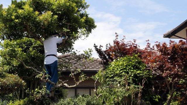庭木のお手入れはシルバーか植木屋のどちらが良い?