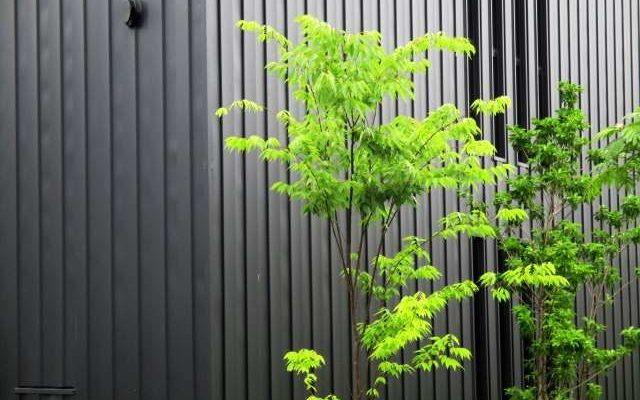 ヒメシャラを剪定する時期と方法・紅葉が綺麗なシンボルツリー