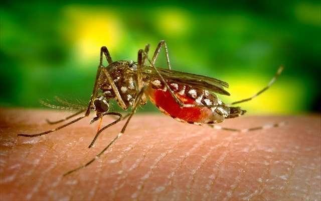 庭の蚊が多すぎる対処法