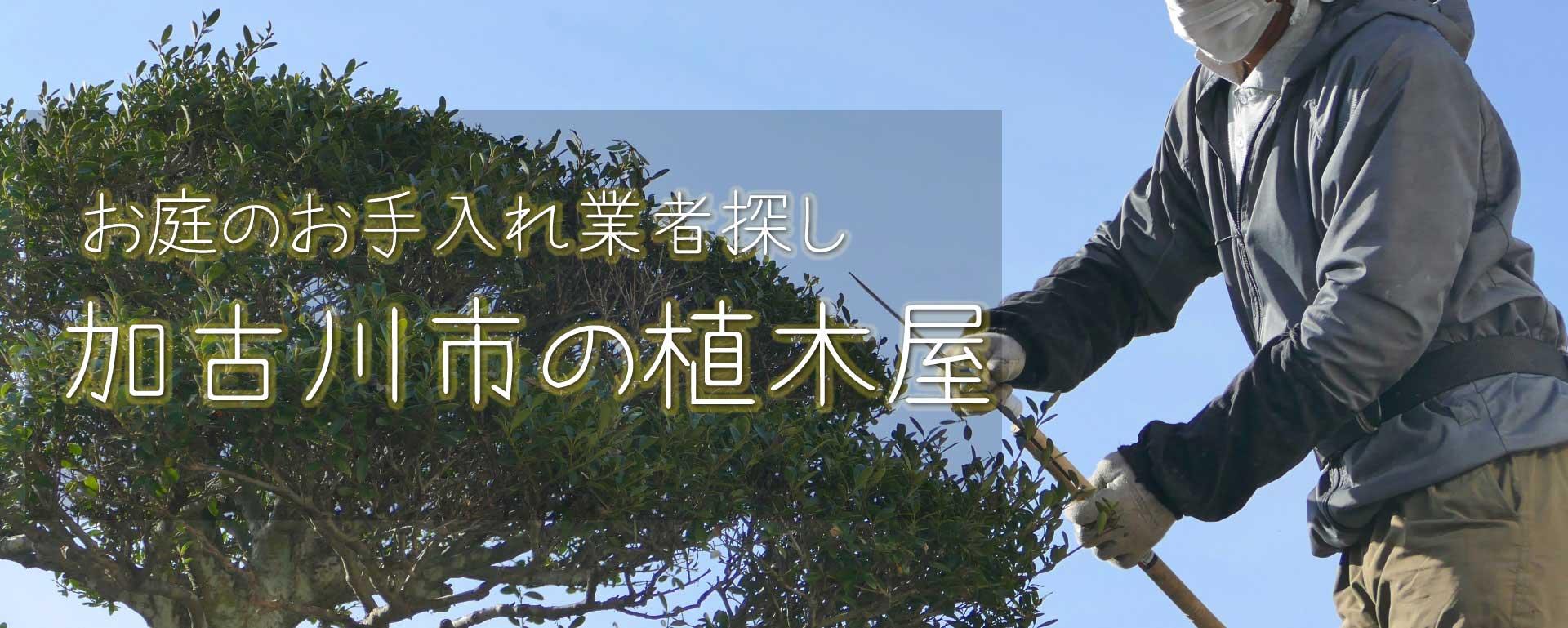 見積り無料の神戸市の植木屋・業者によって料金はバラバラ