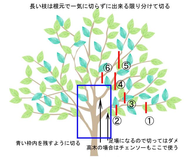 高木の伐採をする方法