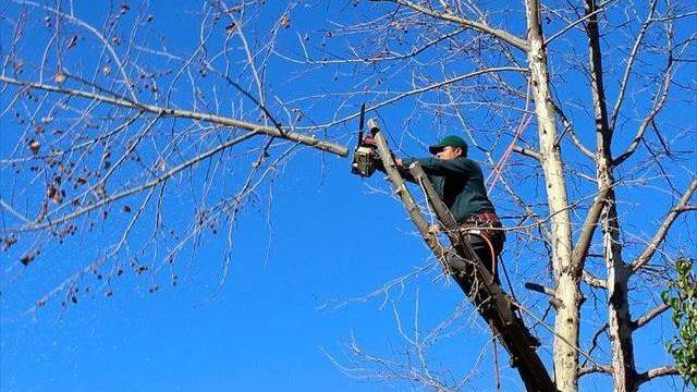 植木屋として独立開業しようか悩んでいる・何が必要ですか?