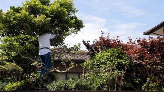 庭園管理士の資格で植木屋になれる?