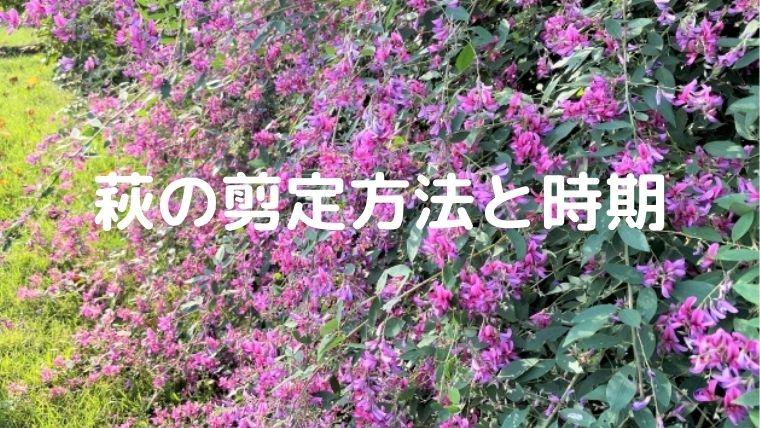 萩(ハギ)の剪定方法と時期