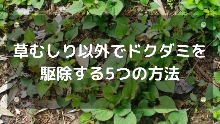 草むしり以外でドクダミを駆除する6つの方法