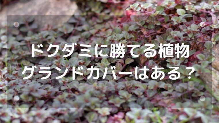 ドクダミに勝てる植物やグランドカバーはある?